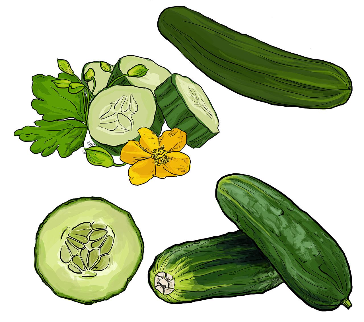 cucumbers_72dpi
