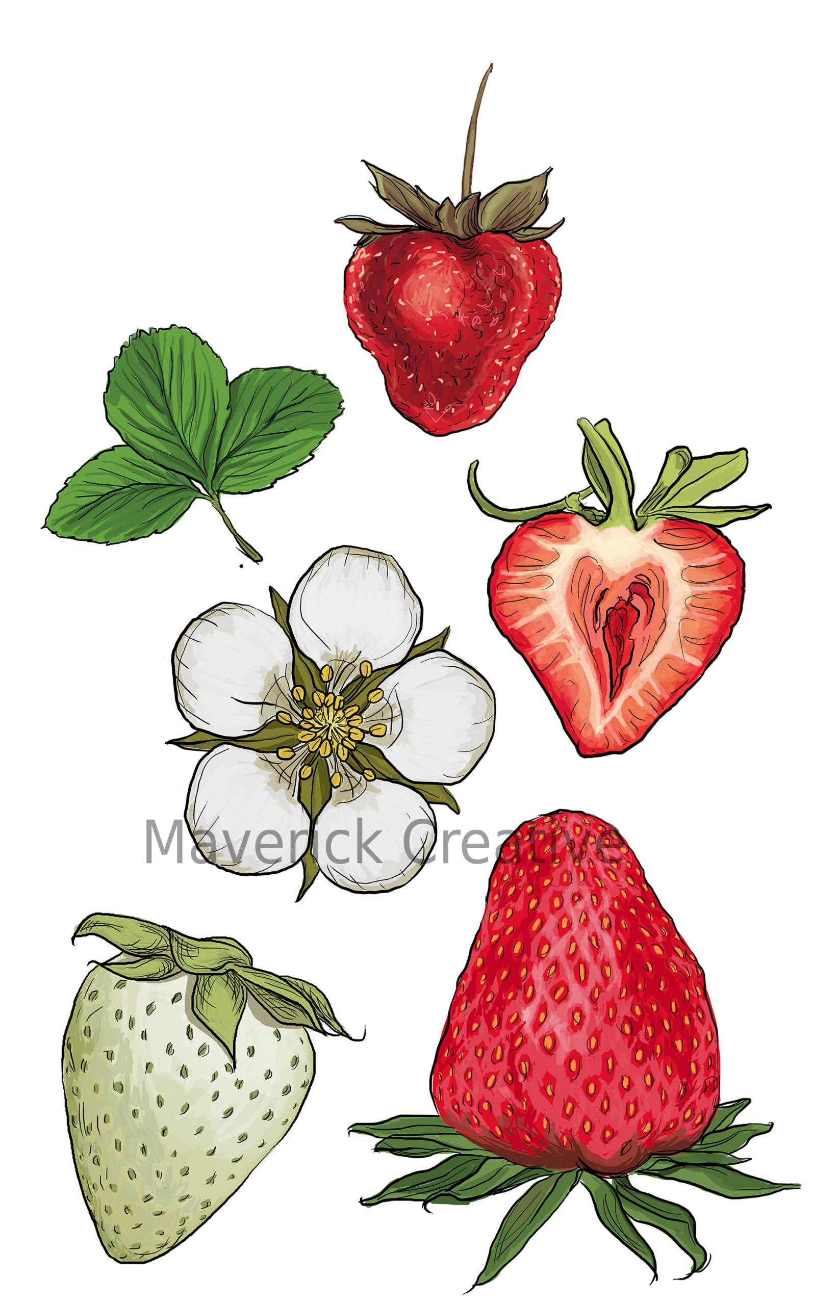 strawberries_72dpiwatermark