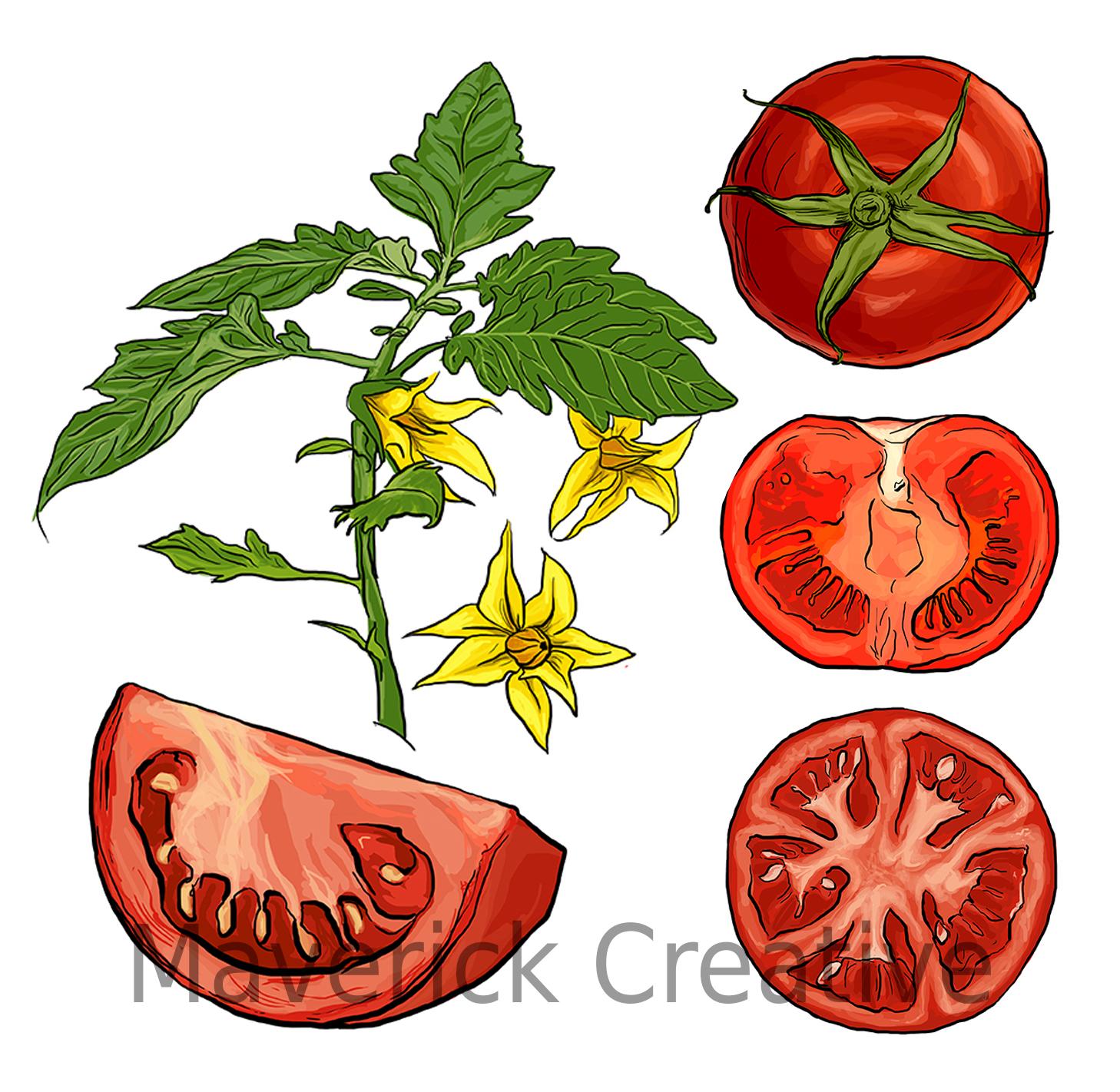tomato_72dpiwatermark